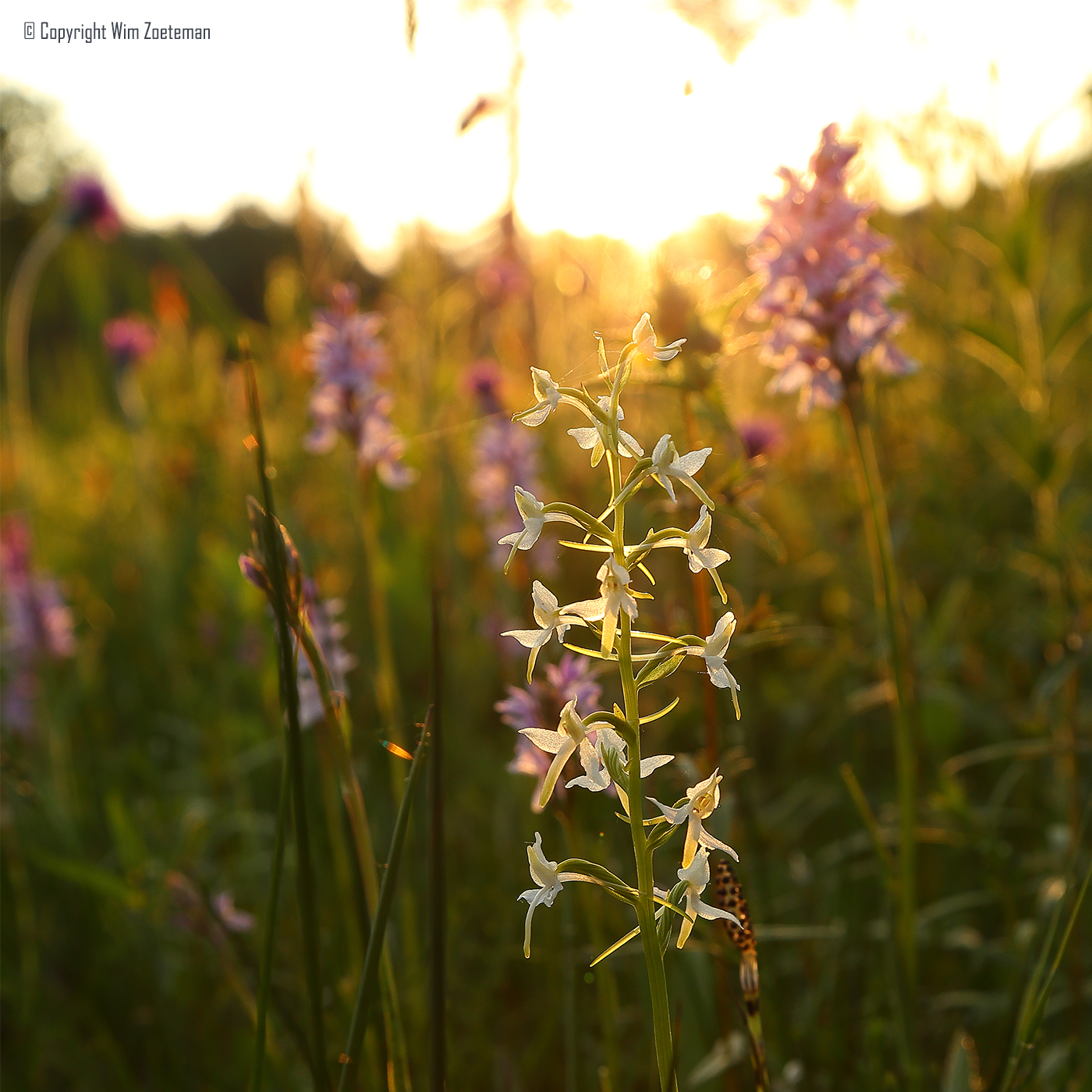 IMG_3452 Stelkampsveld Sunset