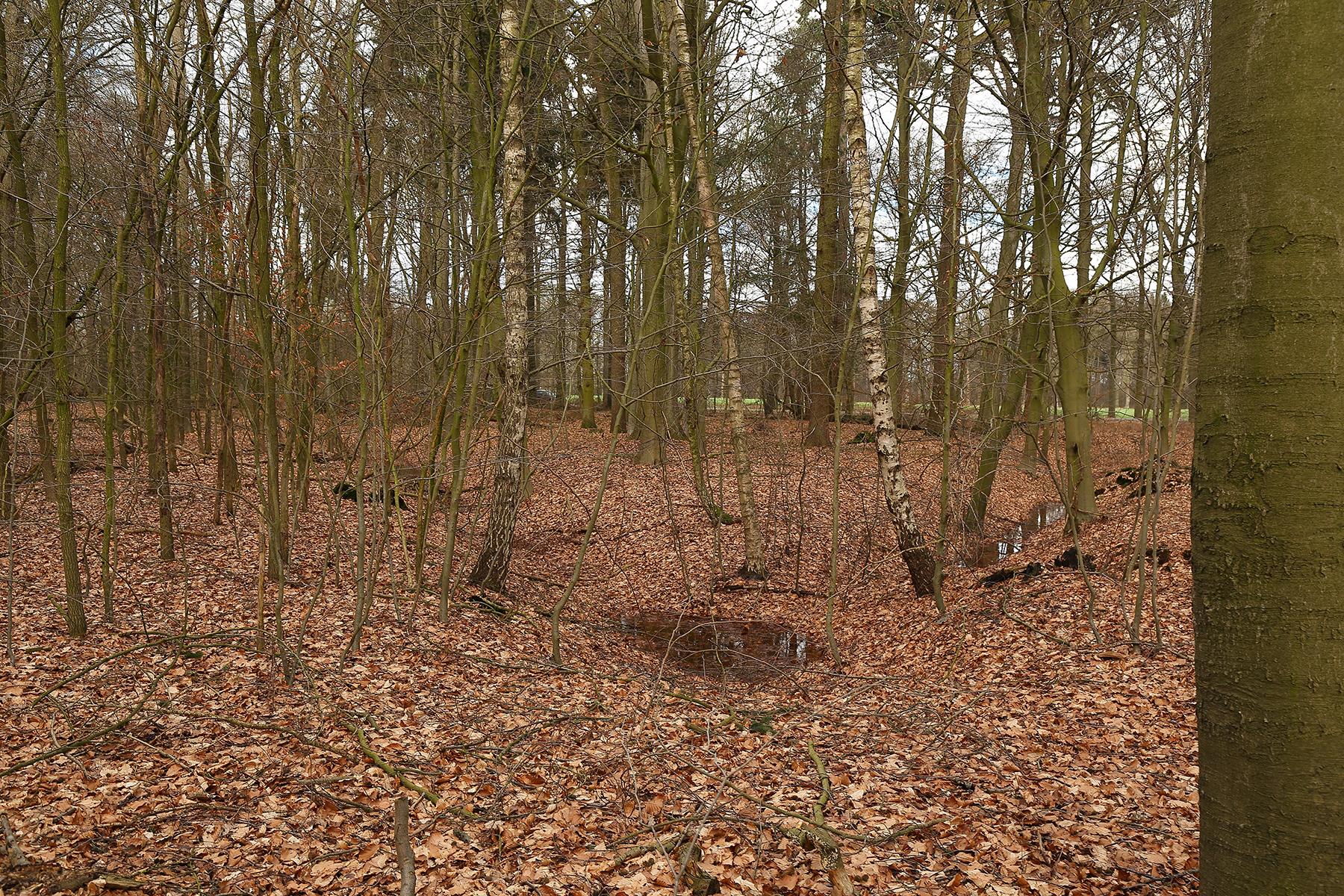 IMG_6734 Sterrenbos Slangenburg